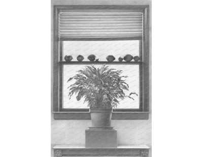 Grapefruits, Plant, and Window
